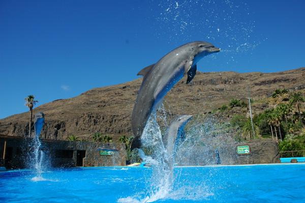 delfinario-palmitos-park